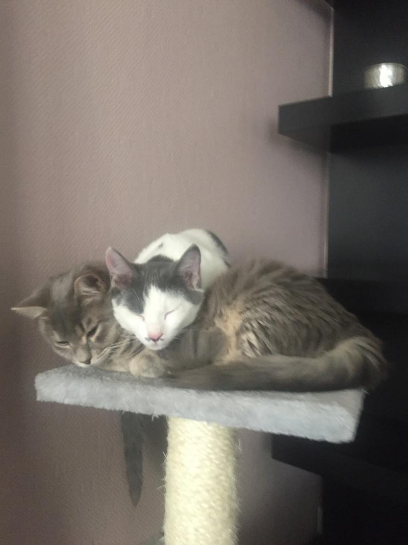 TOM (Eskobar) et JERRY (Chogan) Img_7633