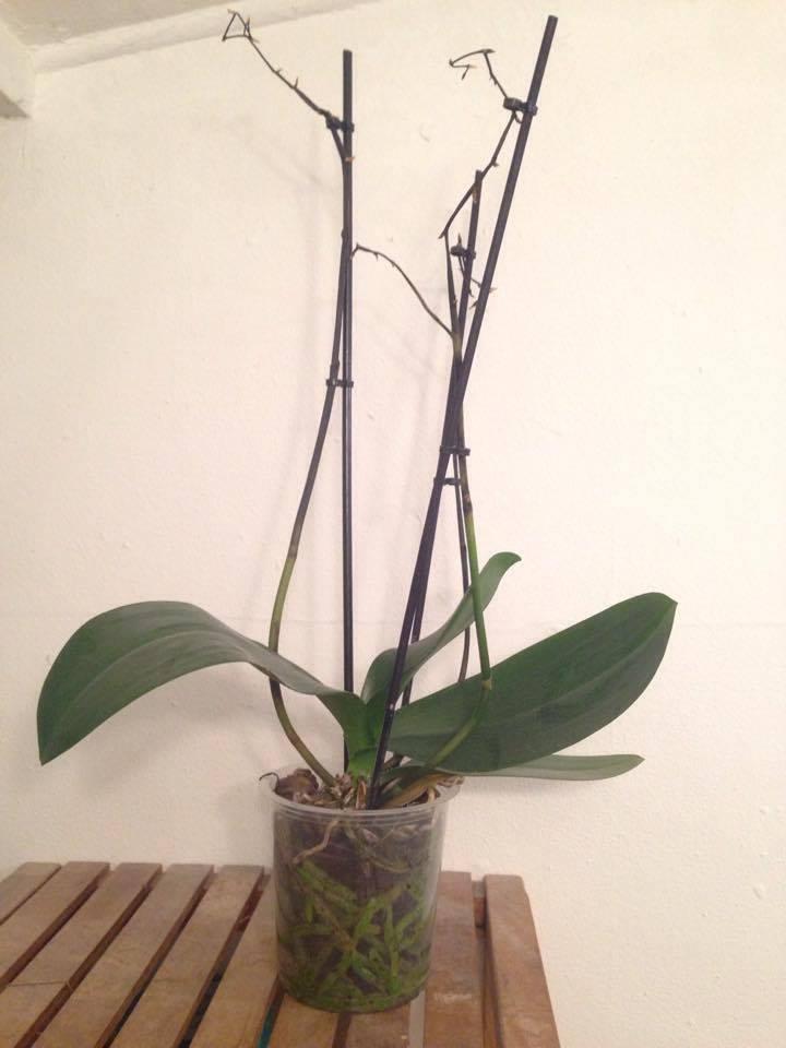 Was hat meine Orchidee und was sollte ich tun? 17555410