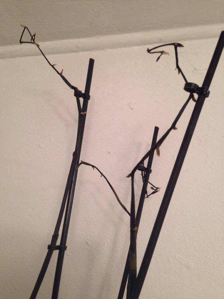 Was hat meine Orchidee und was sollte ich tun? 17577810