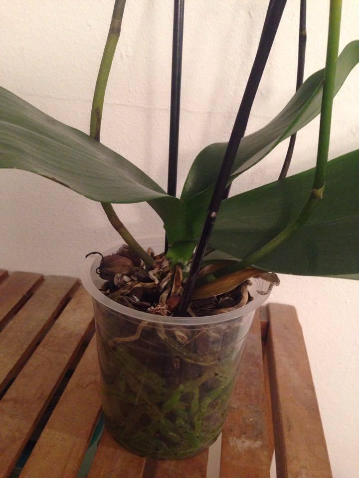 Was hat meine Orchidee und was sollte ich tun? 17619110