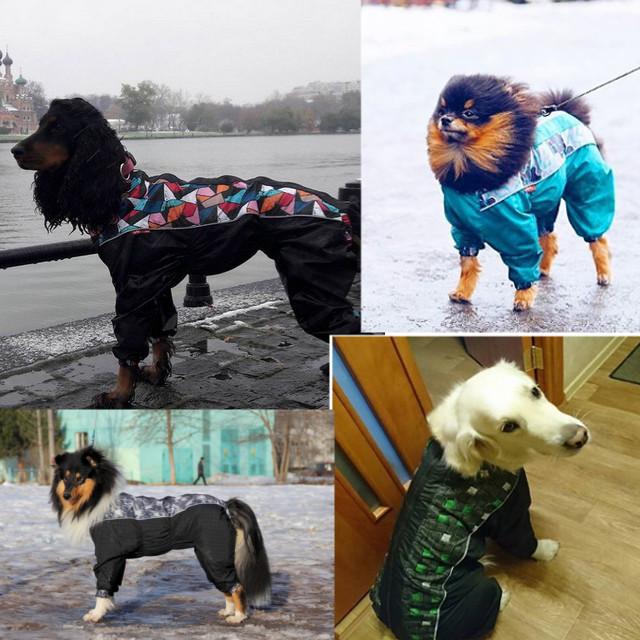 OSSO Fashion - лучшие товары для животных,дрессировки,спорта - Страница 2 All-ma10