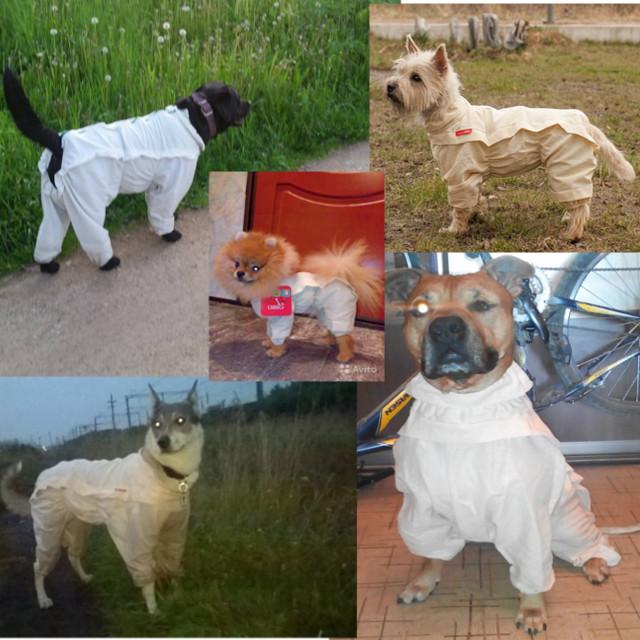OSSO Fashion - лучшие товары для животных,дрессировки,спорта - Страница 2 All-ma12