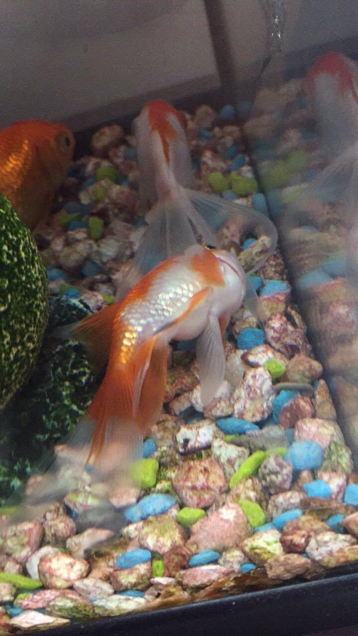 Guppy reste au fond de l'eau 17670411