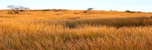 Grande Savanne (Ouest)