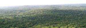 Grande forêt (Est-Ouest)