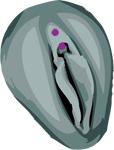 Piercing capuchon du clitoris Pierci11
