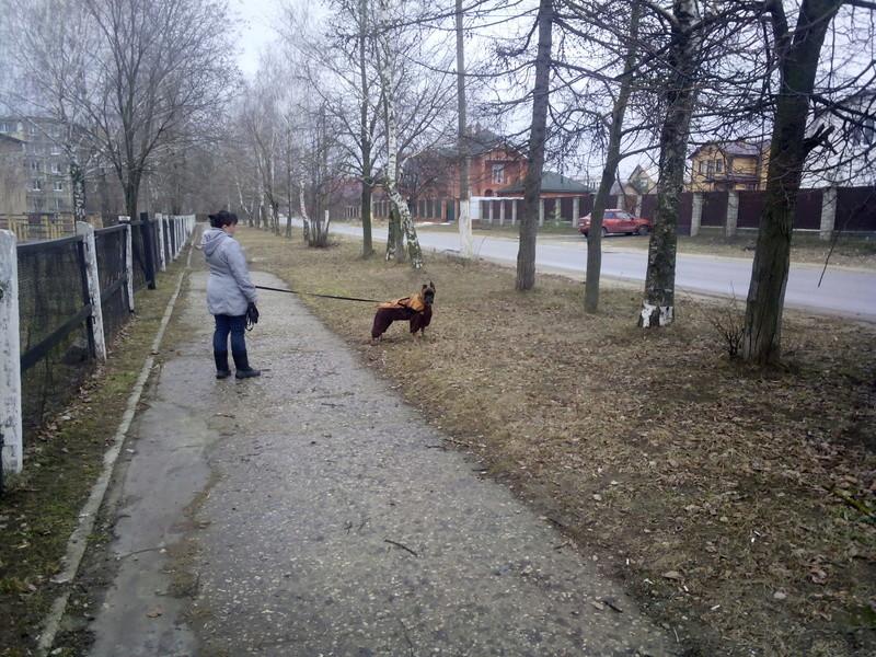 Москва, Афродита, сука 2,5 г - Страница 3 Img_2032