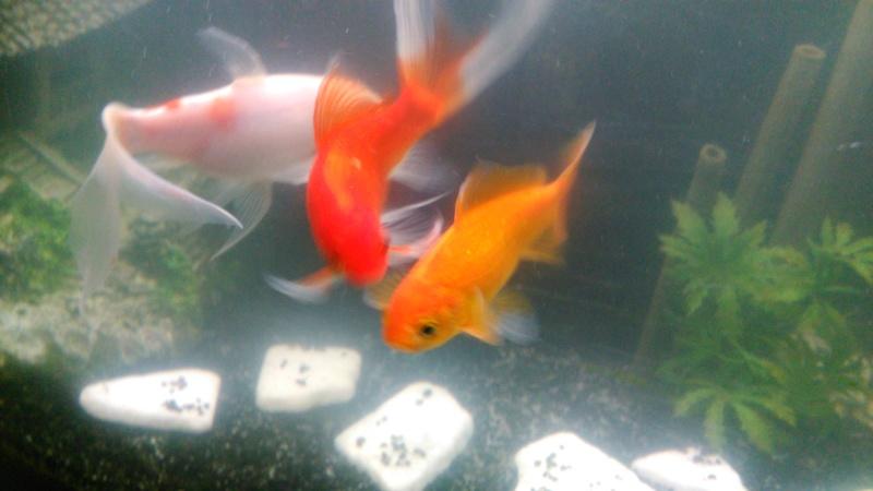 70L à poissons rouges Img_2019