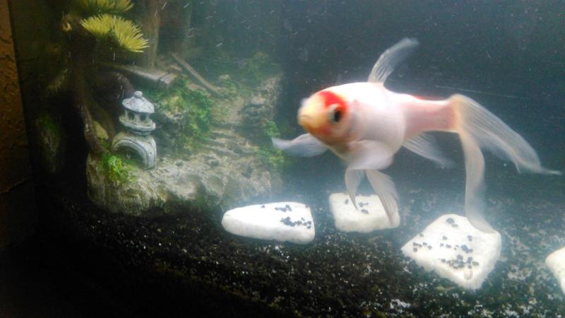70L à poissons rouges Img_2020