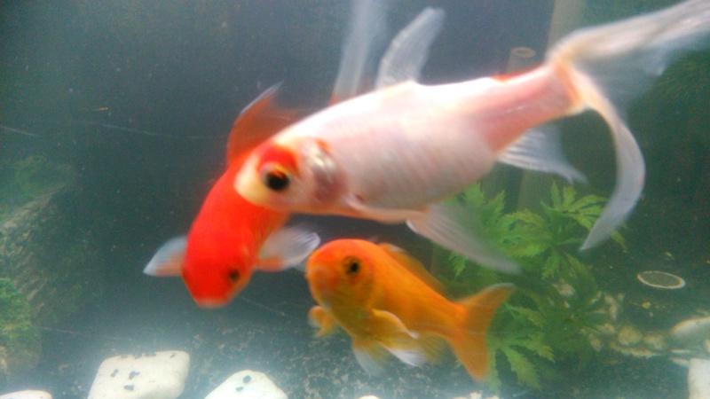 70L à poissons rouges Img_2021