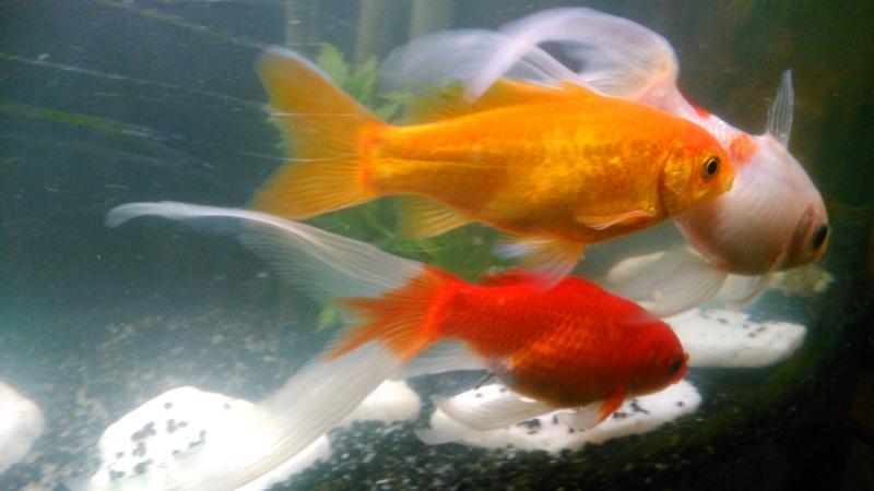 70L à poissons rouges Img_2022