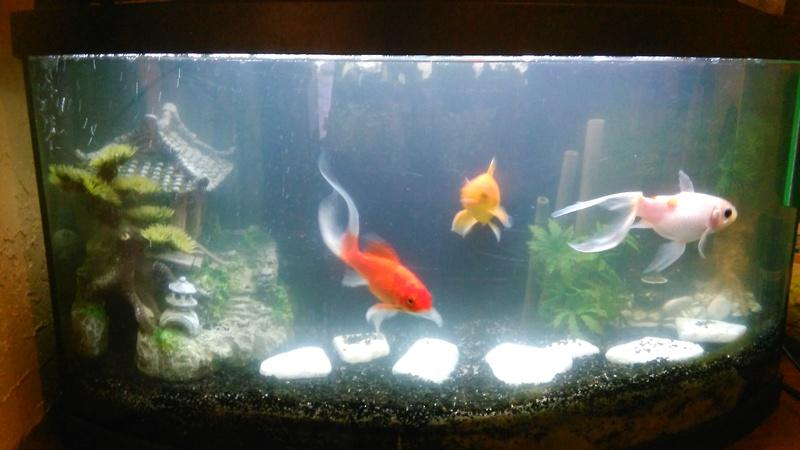 70L à poissons rouges Img_2023