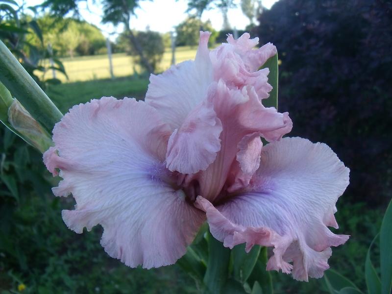 identifications d 'Iris 006_210