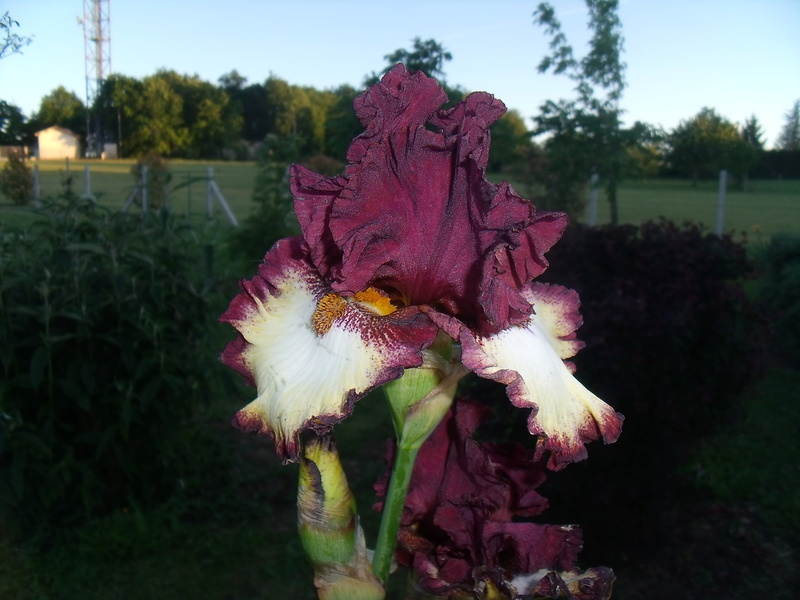 identifications d 'Iris 010_110