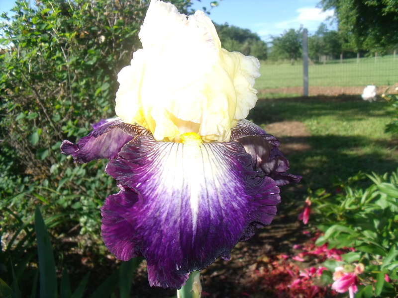 identifications d 'Iris 01310