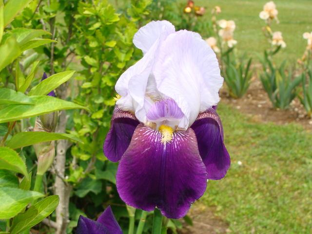 identifications d 'Iris 13011