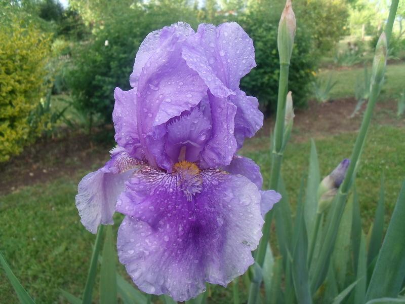 identifications d 'Iris 1410