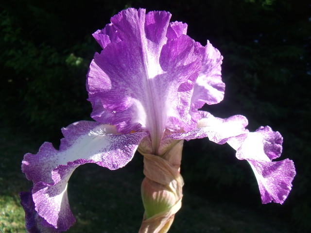 identifications d 'Iris Gedc7412