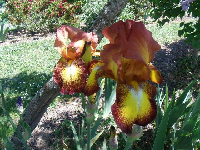 identifications d 'Iris Gedc7418