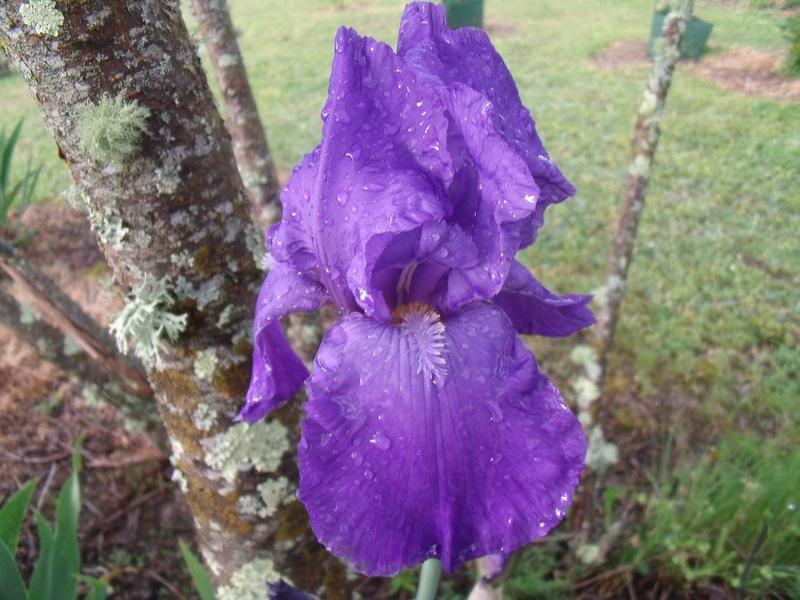 identifications d 'Iris Gedc7424