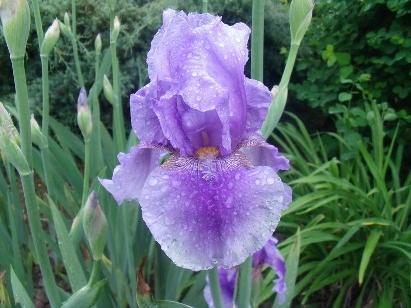 identifications d 'Iris Gedc7425