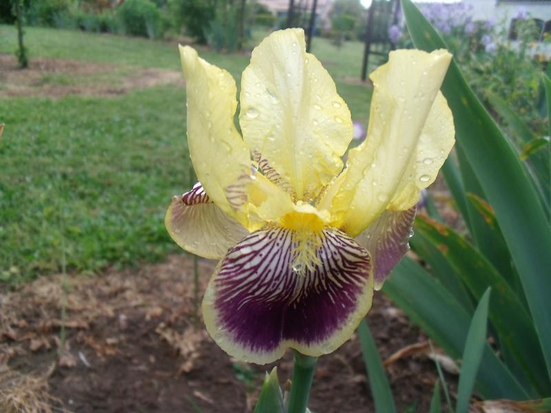 identifications d 'Iris Gedc7427
