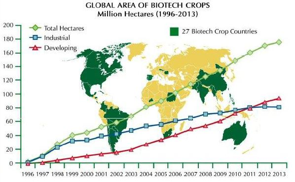Organismos modificados genéticamente Biotec11