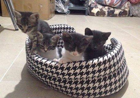 Πανεμορφα γατάκια χαρίζονται 17634811