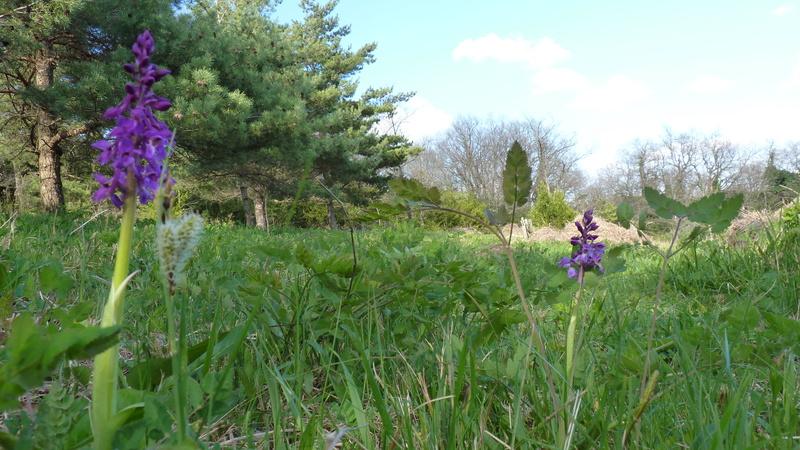 nettoie un terrain : préserver les orchidées P1210913