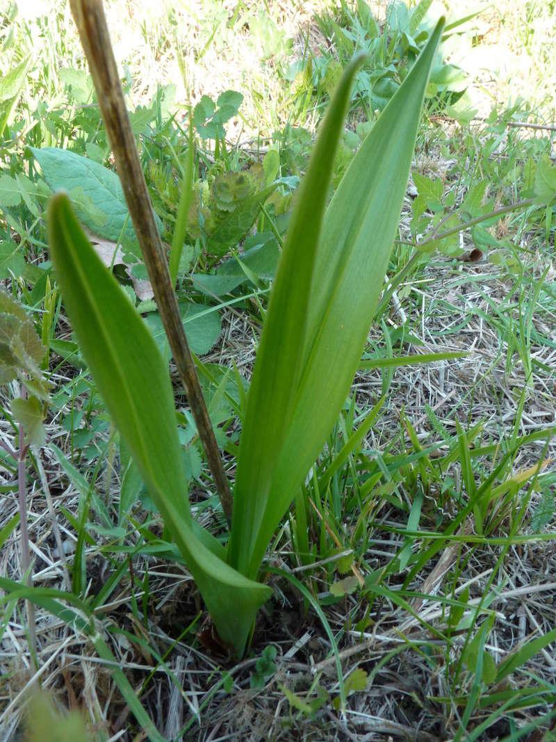 nettoie un terrain : préserver les orchidées P1210917