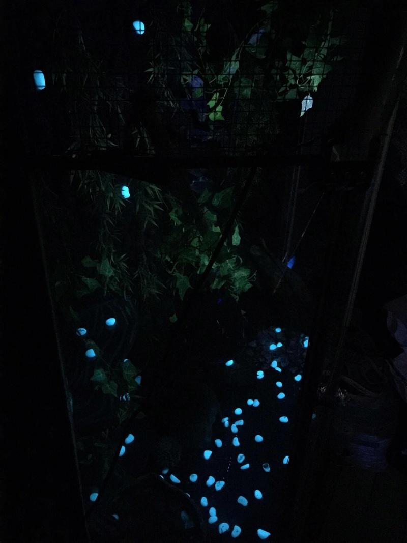 petites pierres eclairer ou non la nuit?  17820610