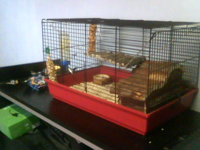 Une cage trop petite ? Cheese10