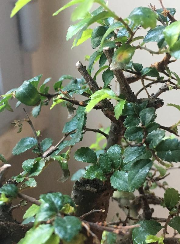 Se le caen las hojas y se esta secando!! AYUDA!!!! Img_6717