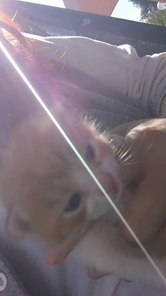 Δύο γατάκια βρέθηκαν στα σκουπίδια και τώρα ψάχνουν σπίτι! 17523510