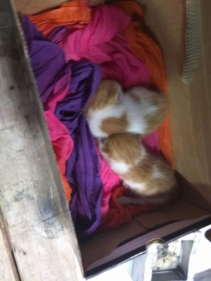 Δύο γατάκια βρέθηκαν στα σκουπίδια και τώρα ψάχνουν σπίτι! 17796010
