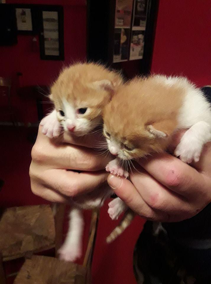 Δύο γατάκια βρέθηκαν στα σκουπίδια και τώρα ψάχνουν σπίτι! 53989810