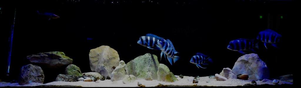 Mi acuario de Frontosas Img_0031