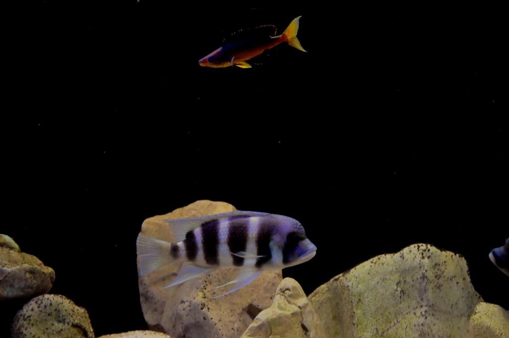 Mi acuario de Frontosas Img_0033
