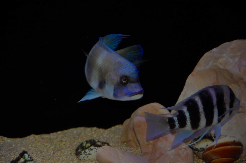 Mi acuario de Frontosas Img_0036