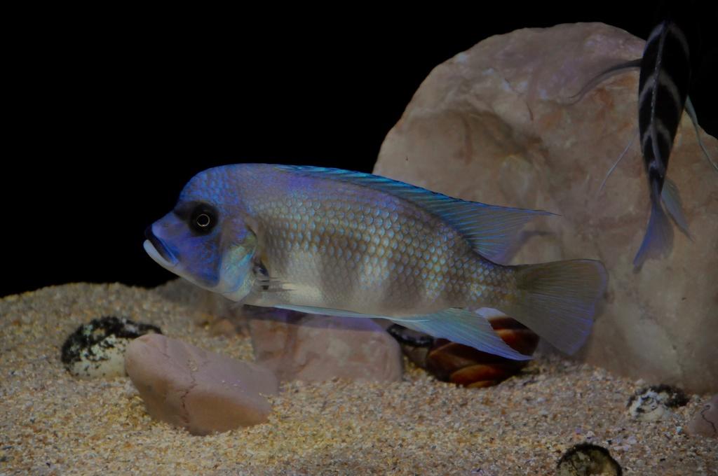 Mi acuario de Frontosas Img_0037