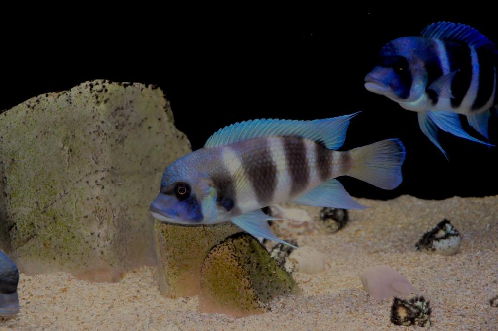 Mi acuario de Frontosas Img_0038
