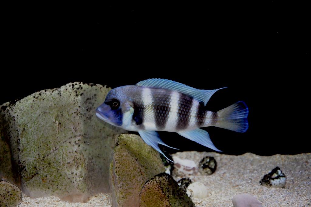 Mi acuario de Frontosas Img_0040