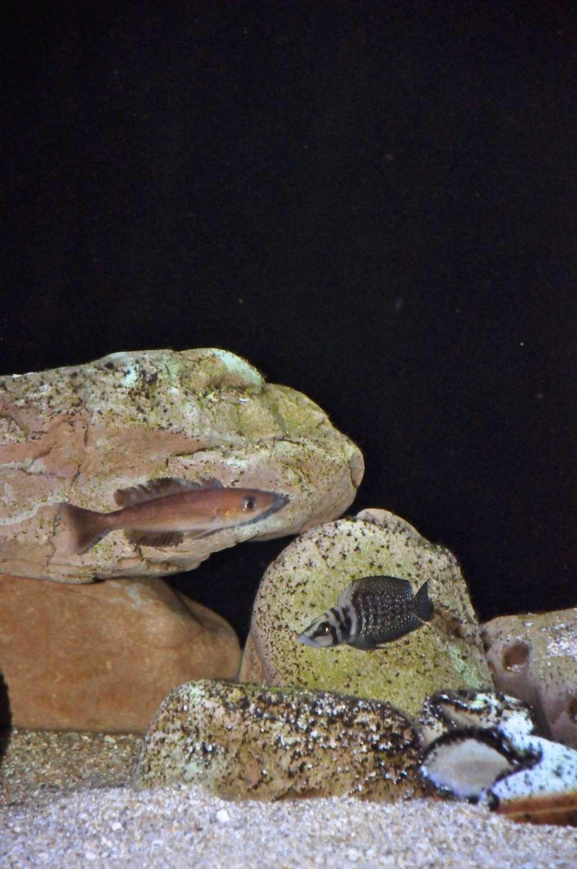 Mi acuario de Frontosas Img_0045