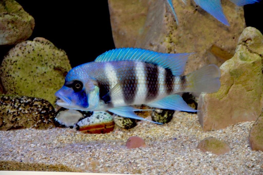 Mi acuario de Frontosas Img_0050