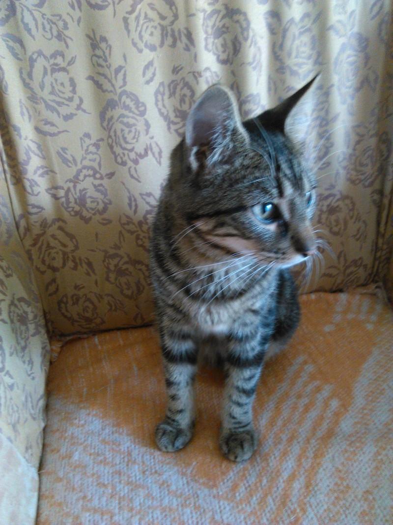 TIGROU, chat tigré né le 1er août 2016 Img_2018