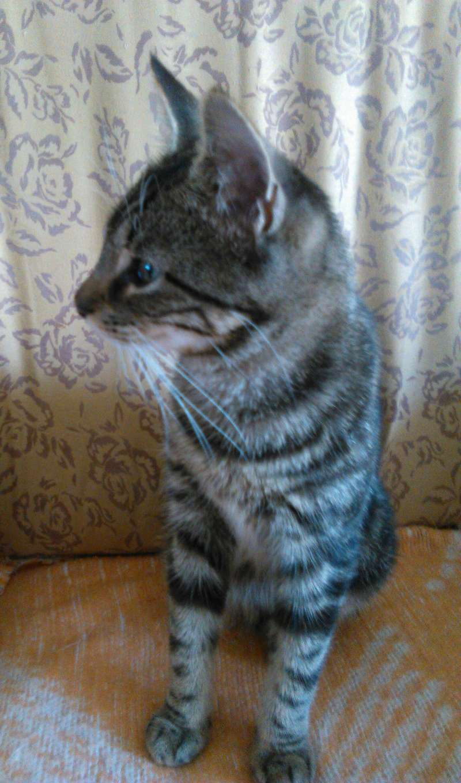 TIGROU, chat tigré né le 1er août 2016 Img_2020