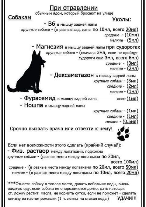 ПРИ ОТРАВЛЕНИИ ЯДОМ  10462910