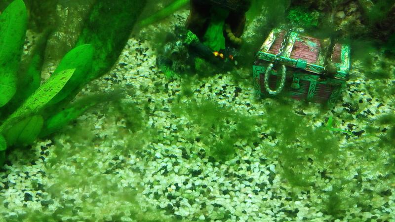 algue persistante Img_2010