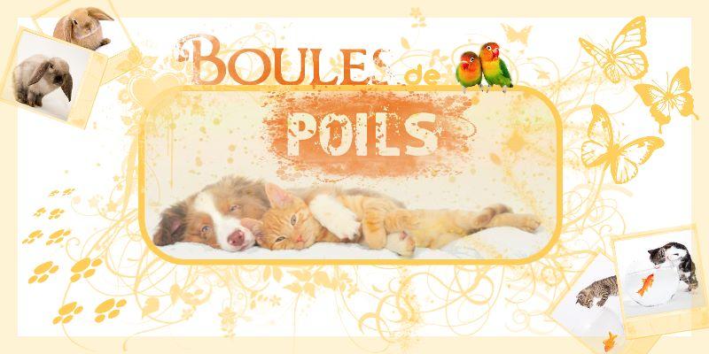 Boules de Poils 18308612