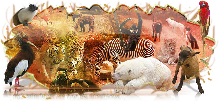 Animal favoris I_logo10